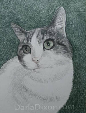 colored pencil drawing of cat from photo